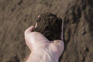 Premium Compost 1/2″ minus (Premium Organic)
