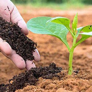 Man adding Topsoil to plants