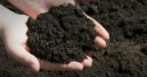 Man holding Topsoil